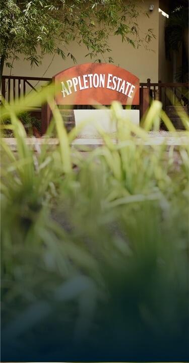 Discover The Joy Spence Appleton Estate Rum Experience