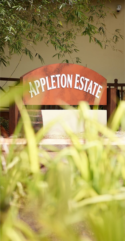 The Joy Spence Appleton Estate Rum Experience